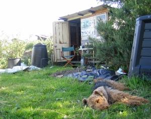 sheddog2