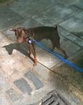 Handsome Hound
