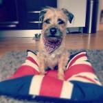 Patriotic Baxter