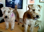 Ivy & Ruby